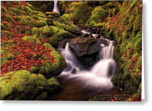 Greeting Card featuring the photograph Autumn Falls by Elliott Coleman