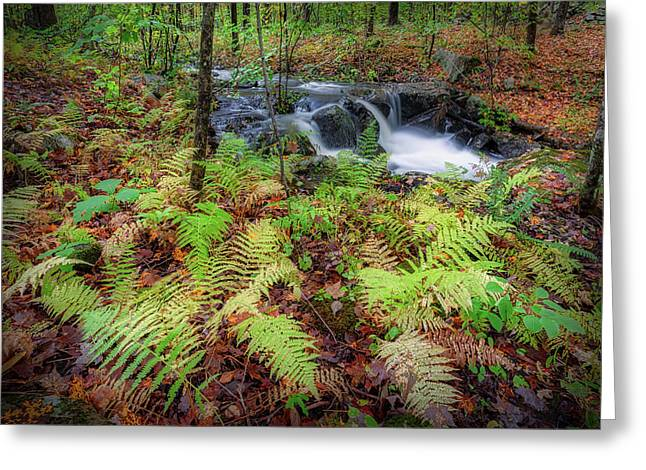 Greeting Card featuring the photograph Autumn Fern by Bill Wakeley
