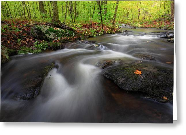 Greeting Card featuring the photograph Autumn Flow by Bill Wakeley