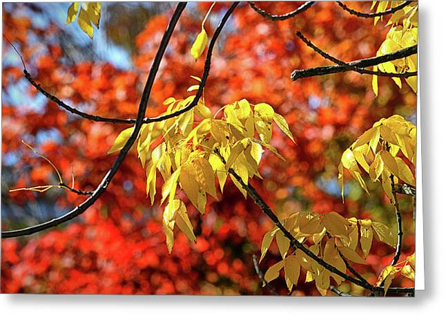 Greeting Card featuring the photograph Autumn Foliage In Bar Harbor, Maine by Bill Swartwout Fine Art Photography