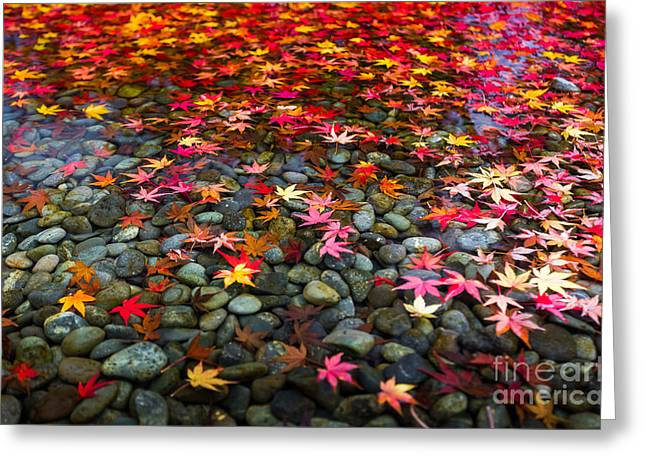 Autumn Foliage In Japan Greeting Card