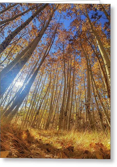 Greeting Card featuring the photograph Autumn Giants by Tassanee Angiolillo