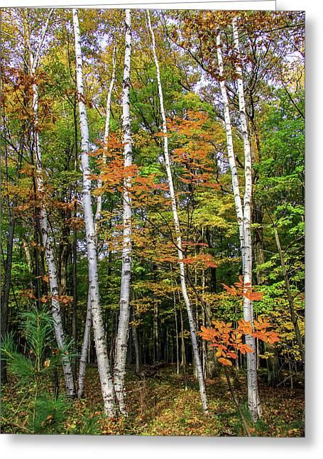 Autumn Grove, Vertical Greeting Card
