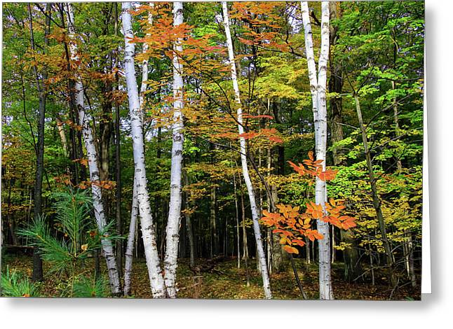 Autumn Grove, Wisconsin Greeting Card