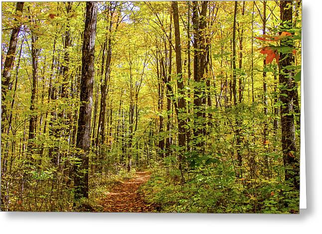 Autumn Hike Greeting Card