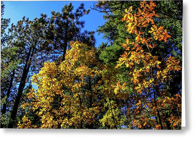 Autumn In Apache Sitgreaves National Forest, Arizona Greeting Card