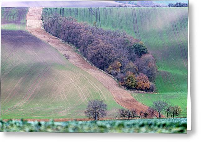 Greeting Card featuring the photograph Autumn In Moravia 4 by Dubi Roman
