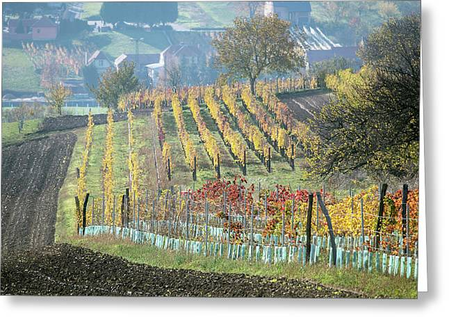 Greeting Card featuring the photograph Autumn In Moravia 14 by Dubi Roman