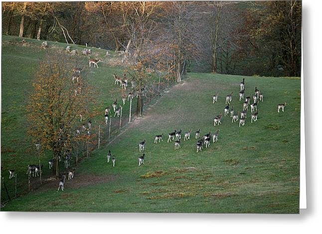 Greeting Card featuring the photograph Autumn In Moravia 9 by Dubi Roman