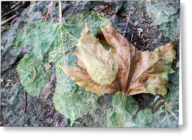 Greeting Card featuring the photograph Autumn Leaves by Dubi Roman