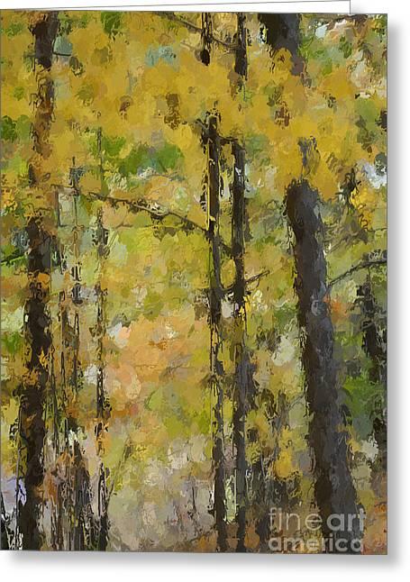 Autumn Light Greeting Card by David Boudreau