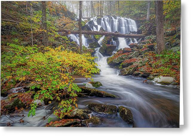 Greeting Card featuring the photograph Autumn Mist by Bill Wakeley
