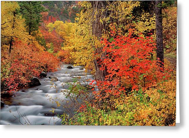 Autumn Rapids Greeting Card by Leland D Howard