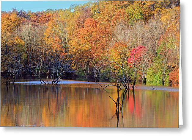 Greeting Card featuring the photograph Autumn Reflections by Angela Murdock