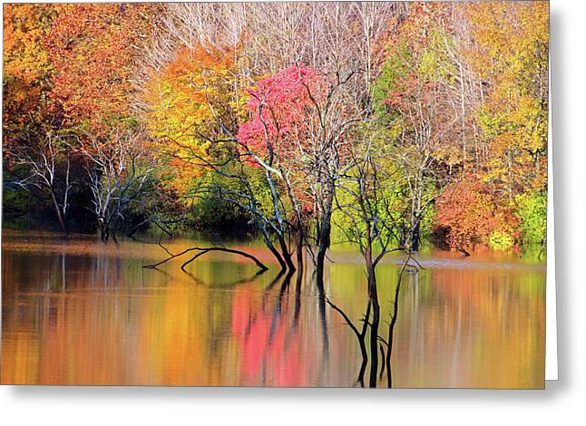 Greeting Card featuring the photograph Autumn Reflections At Alum Creek by Angela Murdock