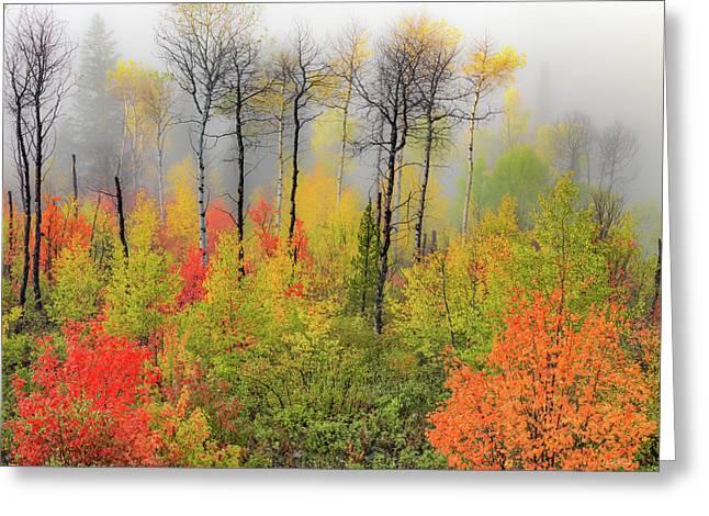 Autumn Shades Greeting Card by Leland D Howard