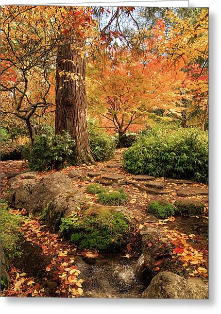 Autumn Stream In Lithia Park Greeting Card