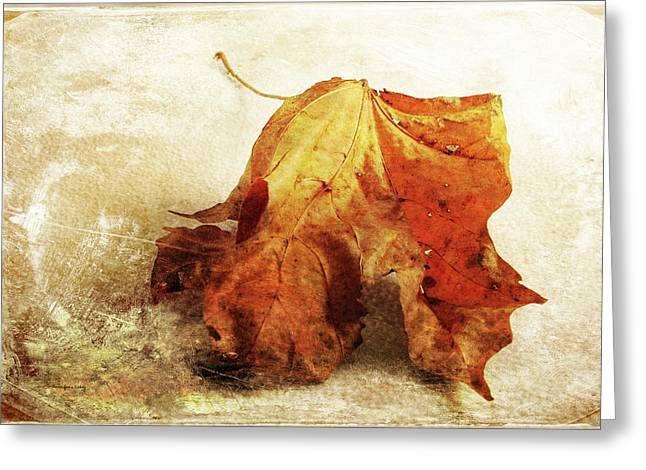 Greeting Card featuring the photograph Autumn Texture by Randi Grace Nilsberg