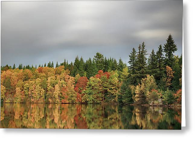 Greeting Card featuring the photograph Autumn Tree Reflections by Grant Glendinning