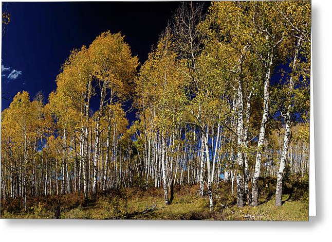Greeting Card featuring the photograph Autumn Walk In The Woods by James BO Insogna