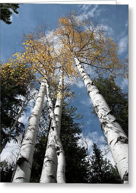 Autumnal Aspen Greeting Card