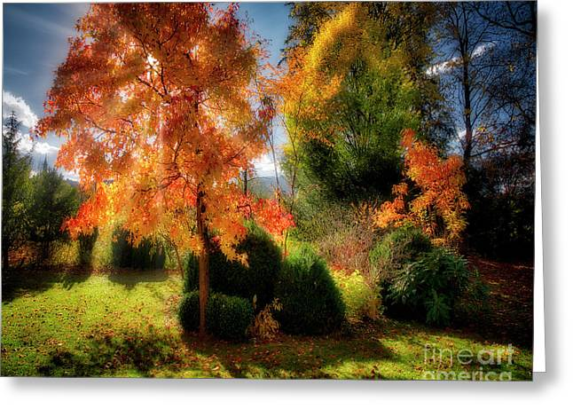 Greeting Card featuring the photograph Autumnal Glory by Edmund Nagele