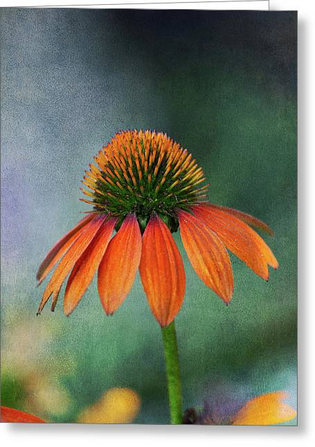 Greeting Card featuring the photograph Awaiting  Pollination by Dale Kincaid