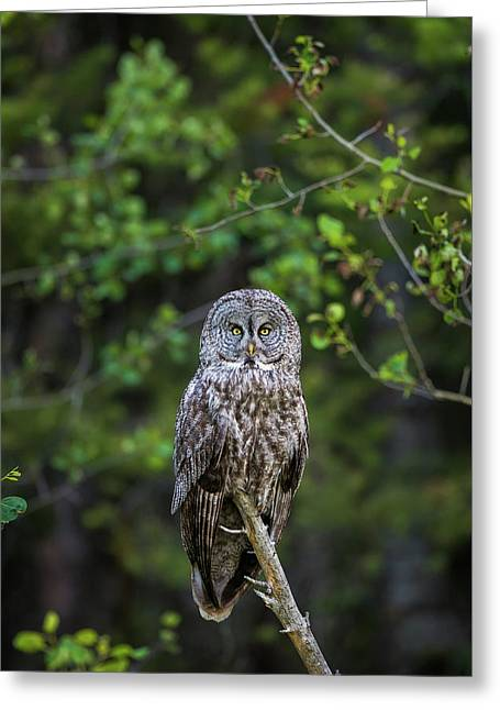 Greeting Card featuring the photograph B16 by Joshua Able's Wildlife