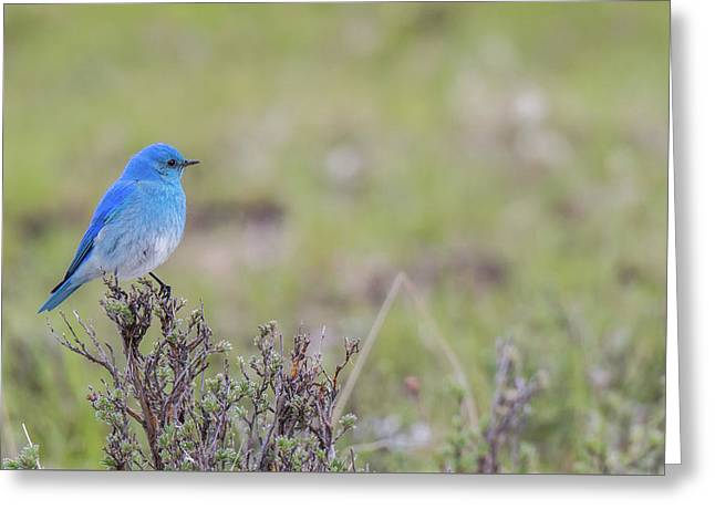Greeting Card featuring the photograph B23 by Joshua Able's Wildlife