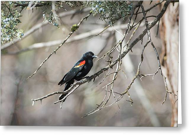 Greeting Card featuring the photograph B26 by Joshua Able's Wildlife