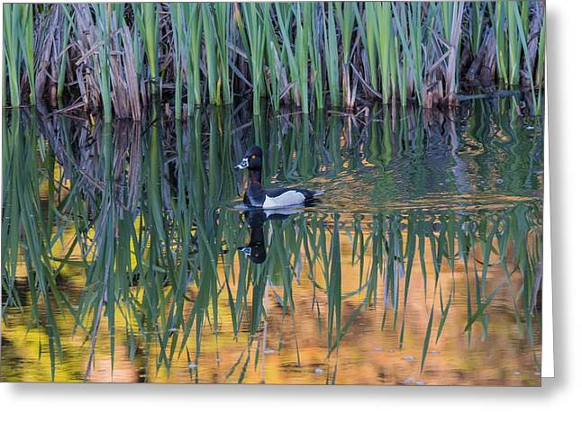 Greeting Card featuring the photograph B32 by Joshua Able's Wildlife