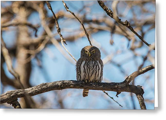 Greeting Card featuring the photograph B34 by Joshua Able's Wildlife