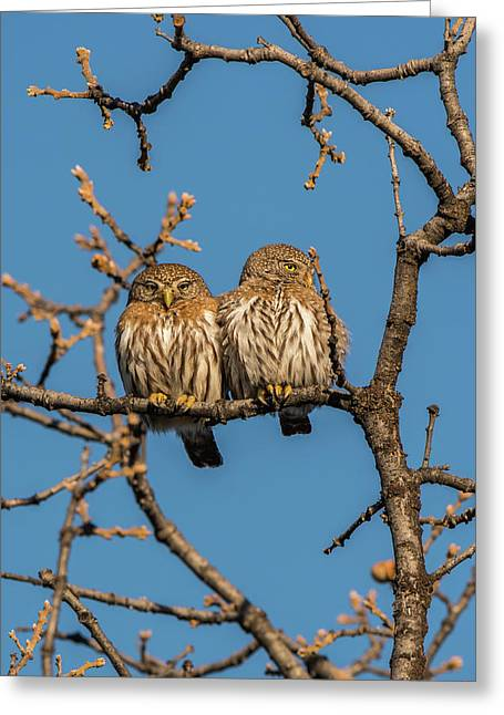 Greeting Card featuring the photograph B36 by Joshua Able's Wildlife