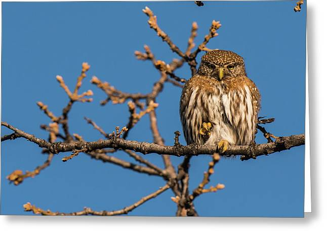 Greeting Card featuring the photograph B37 by Joshua Able's Wildlife