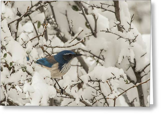 Greeting Card featuring the photograph B44 by Joshua Able's Wildlife