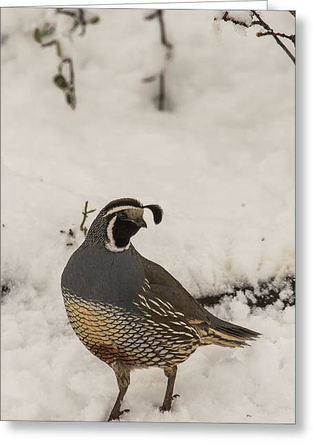 Greeting Card featuring the photograph B45 by Joshua Able's Wildlife