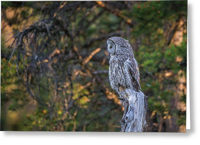 Greeting Card featuring the photograph B46 by Joshua Able's Wildlife