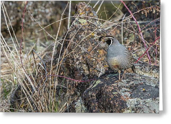 Greeting Card featuring the photograph B53 by Joshua Able's Wildlife