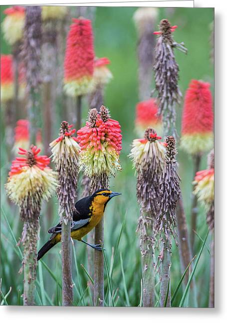 Greeting Card featuring the photograph B58 by Joshua Able's Wildlife