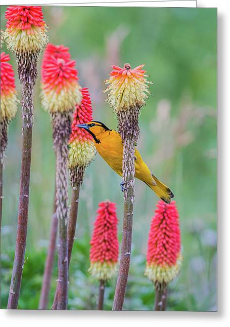Greeting Card featuring the photograph B59 by Joshua Able's Wildlife