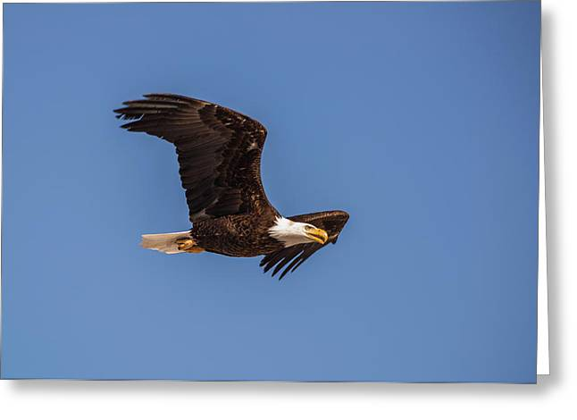 Greeting Card featuring the photograph B8 by Joshua Able's Wildlife