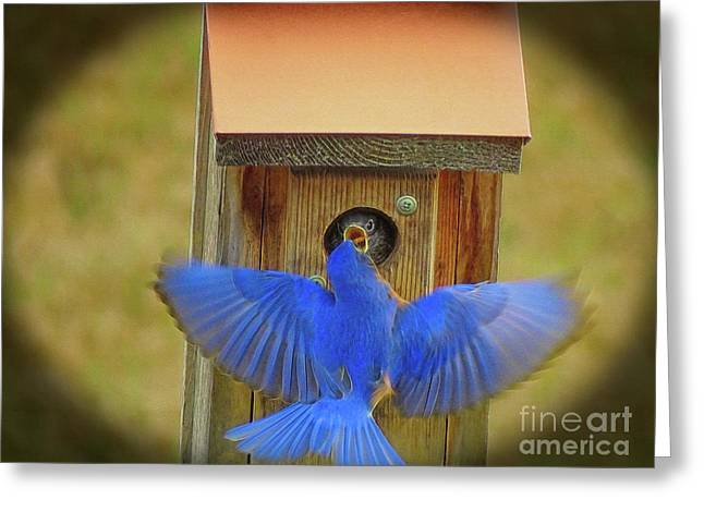 Baby Bluebird Feeding Time Greeting Card