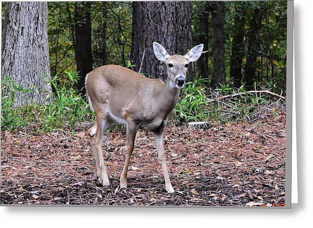 Baby Doe Greeting Card