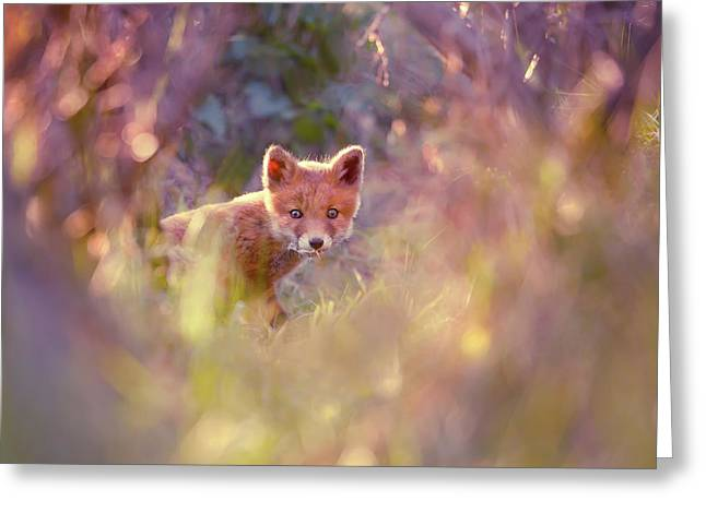 Baby Fox In A Fairytale Forest Greeting Card