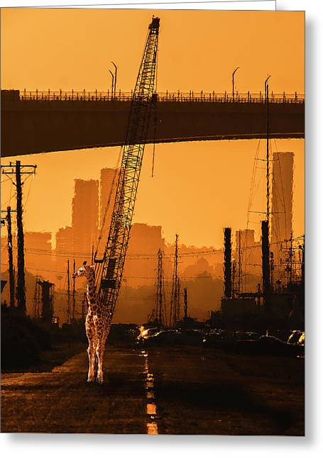 Greeting Card featuring the photograph Baby Giraffe In The Urban Jungle. by Rob D Imagery