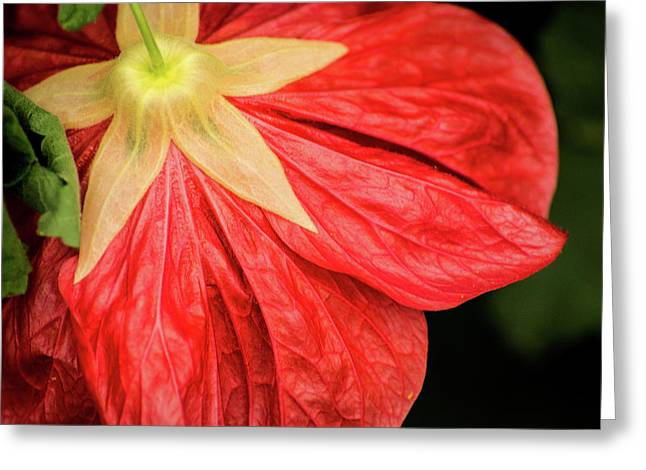 Back Of Red Flower Greeting Card