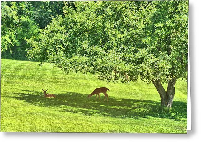 Backyard Babies Greeting Card by Jamart Photography