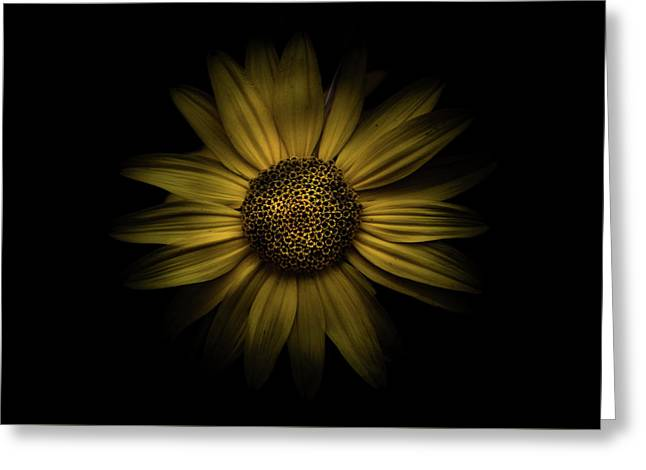 Greeting Card featuring the photograph Backyard Flowers 18 Color Version by Brian Carson