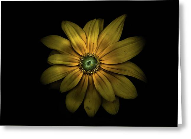 Greeting Card featuring the photograph Backyard Flowers 34 Color Version by Brian Carson