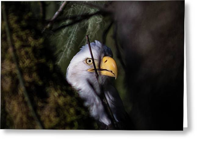 Bald Eagle Behind Tree Greeting Card